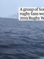 Beluga whale filmed playing 'fetch' with Rugby World Cup ball - HD.mp4